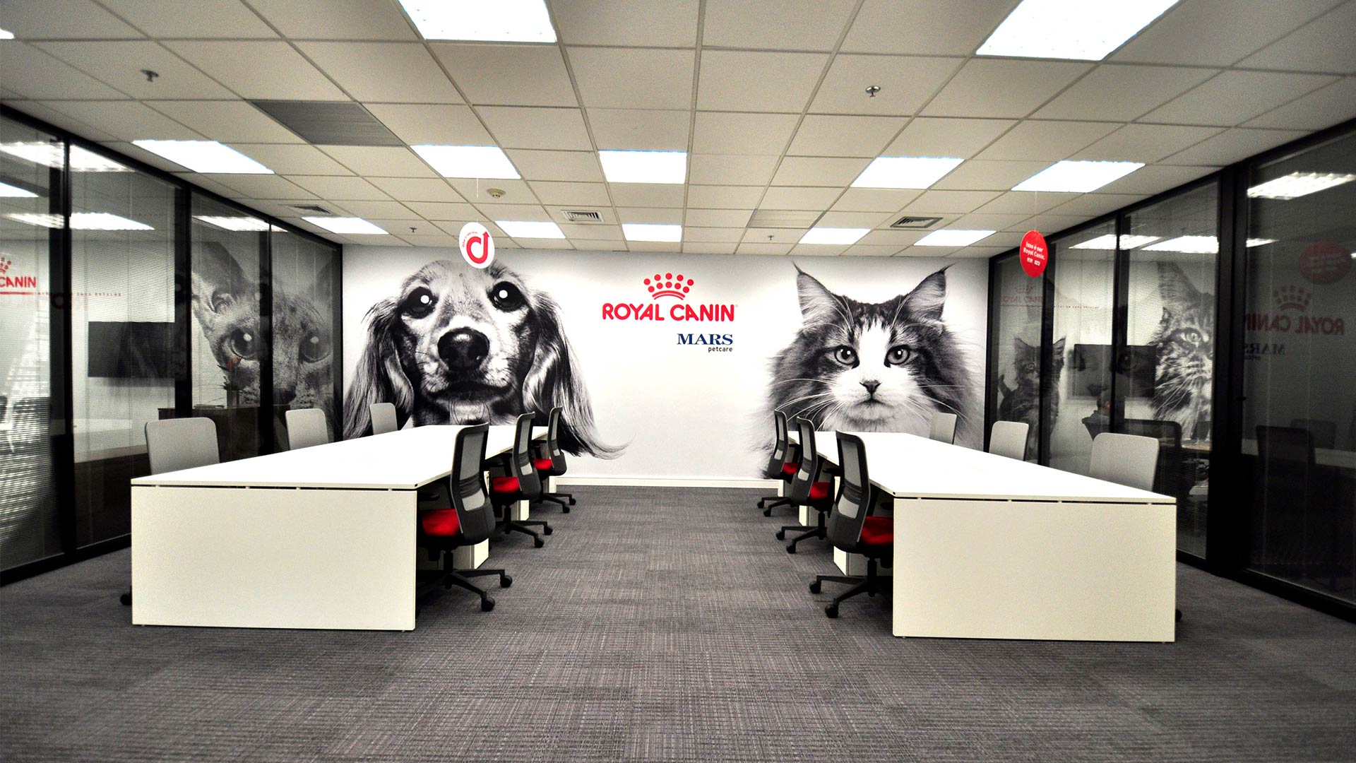Stay Corp - Cases - Royal Canin